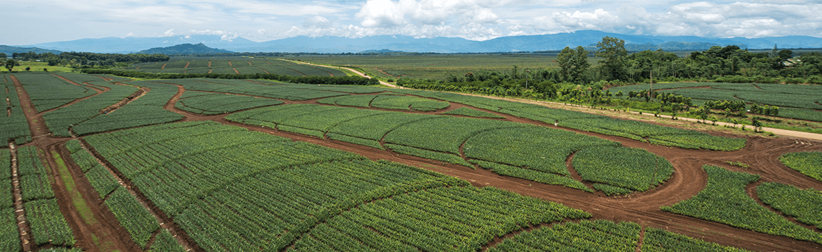 Sustainability and environmentally sensitive design are paramount to high quality pineapple production.